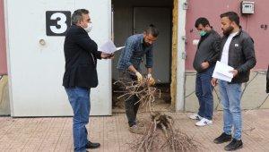 Van Büyükşehir Belediyesinden çiftçiye meyve fidanı desteği