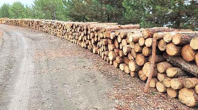 Ahşap paletçiler kâğıtlık orman emvallerinin boylarının kısa kesilmesine tepkili
