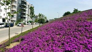 Aliağa'da açan çiçekler rengarenk görüntü oluşturdu
