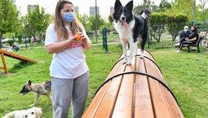Ankara Büyükşehirden hayvanseverler için pati parkları
