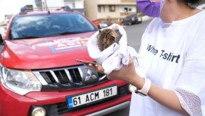 Annesiz kalan minik kedi yavrusu yeni annesine kavuştu