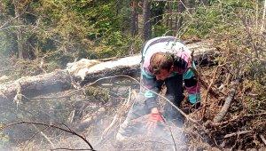 Artvin'deki orman yangınında 4 bin çam ve ladin ağacı yandı