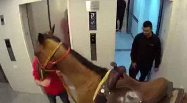 Atını asansörle lüks apartmanın üst katına çıkardı, ifadesi olaydan daha vahim