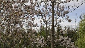 Bahar mevsimine yakışan kartpostallık manzaralar