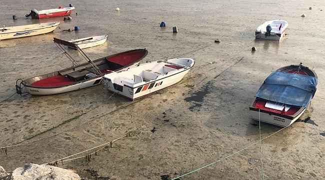 Beyaza bürünen körfezde balıklar tek tek ölmeye başladı - Bursa Haberleri
