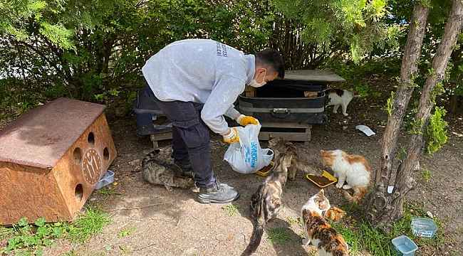 Bilecik'te sokak hayvanları unutulmadı