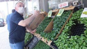 Burhaniye'de pandemi sebze fidesi satışlarını artırdı
