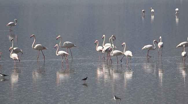 Çardak'ın yerleşik flamingolarından görsel şölen