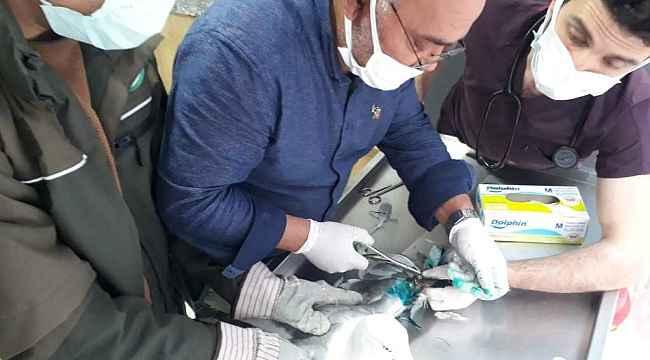 Çocukların dikkati yaralı martıyı kurtardı
