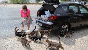Emekli tekstil mühendisi kadın, maaşının yarısıyla 10 yıldır sokak hayvanlarını besliyor