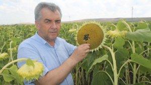 Güne bakanlar yüzünü çiftçiye çevirdi