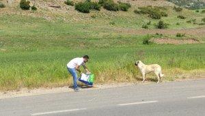 Hayvanseverlerden sokak hayvanlarına mama desteği