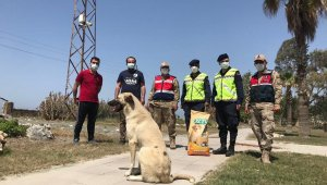 Jandarma tam kapanmada sokak hayvanlarını unutmadı