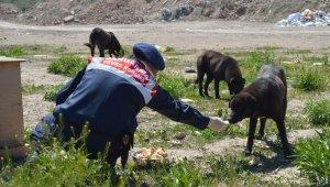 Jandarma yüzlerce sokak hayvanı elleriyle besledi