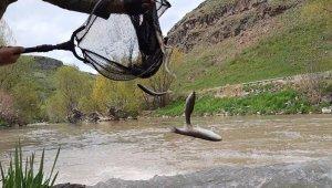 Kars'ta balıkların ölüm göçü sürüyor