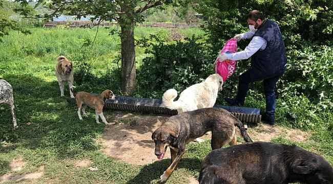 Kartepe'de sokak hayvanları besleniyor