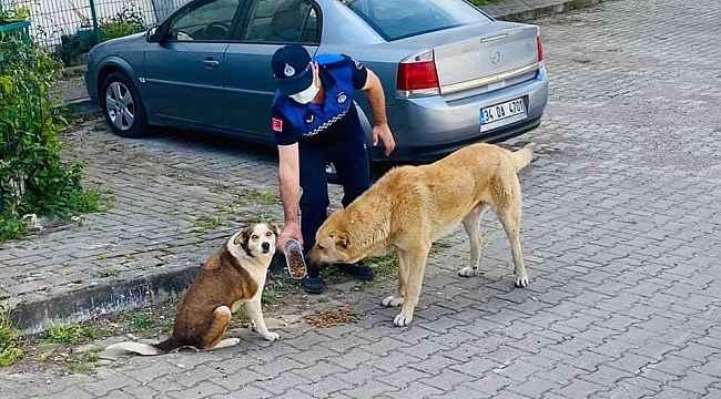 Kısıtlamada sokak hayvanları unutulmadı