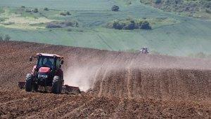Koronaya rağmen Türkiye'nin ayçiçeği ambarı Tekirdağ'da ayçiçeği ekimi başladı