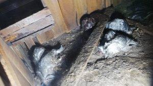 Kümes yangınında tavuk ve civcivler telef oldu