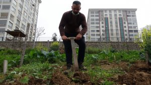 Lüks siteler arasında tarla belleyip bahçe işi yapıyorlar