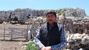 Mersin'de kurtların saldırısına uğrayan 70 küçükbaş hayvan telef oldu