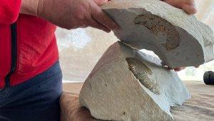 Ordu'da '65 milyon yıllık fosil bulundu' iddiası