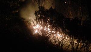 Ordu'da ormanlık alandaki yangına müdahale sürüyor