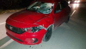 Otomobil ahırdan kaçan ata çarptı: Sürücü yaralandı, at telef oldu