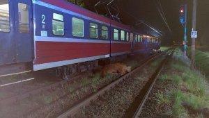 Polonya'da 2 inek tren kazasından yara almadan kurtuldu