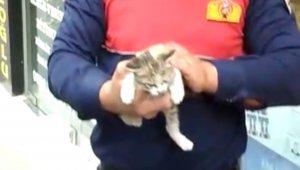 Reklam tabelasının içinden çıkamayan yavru kedi kurtarıldı