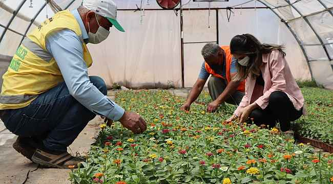 Şanlıurfa'da yetiştirilen çiçekler park ve caddelere dikiliyor