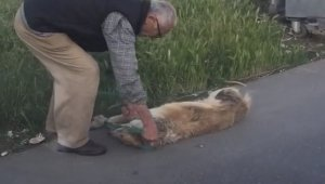 Sarıyer'de köpeği ciple sürükleyerek çöpe atan şahıs serbest bırakıldı