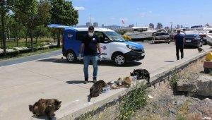 Sokak canları Kartal Belediyesi'ne emanet