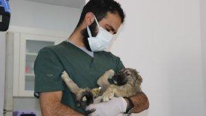 Sokak hayvanlarına işkence edip ölüme terk ettiler