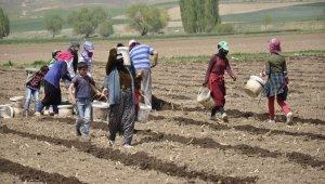 Tarımın bel kemikleri Ramazan ayında işlerinin başında