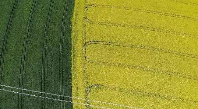 Tekirdağ'da 'Sarı bahar'