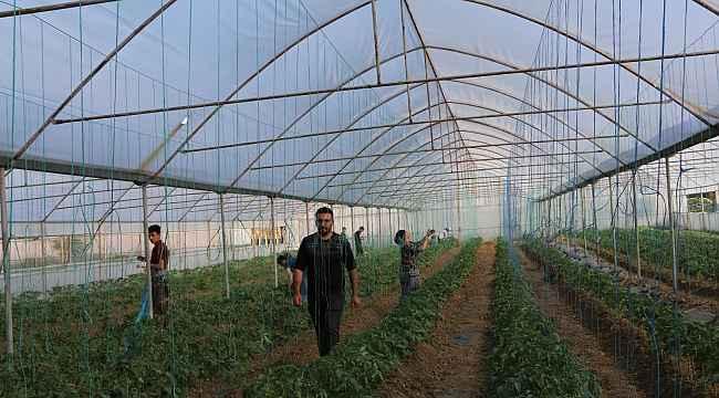 Terörden temizlenen topraklar üretici ile yeniden hayat buluyor