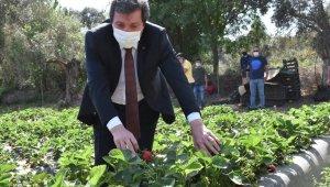 Vali Tavlı, Milas'ta Tarım Üreticilerini Ziyaret Etti