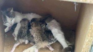 Yavru kediler koruma altına alındı