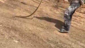 Yolda bulduğu yılanla oyuncak gibi oynadı