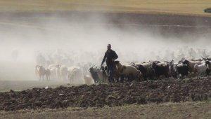 30 koyunla başladı, devlet desteğiyle çiftlik kurdu