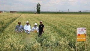 'Yerli ve milli tohumların ulaşmadığı çiftçi kalmasın'