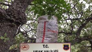 Ağaç dalları üzerinde uyuşturucu yetiştiren şahıs yakalandı