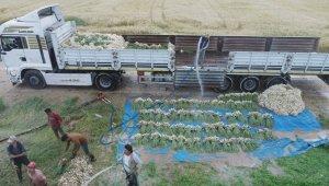 Aksaray'da sular çekildi, üreticiler az su isteyen ürünlere yöneldi