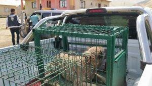Belediye ekiplerinden yaralı köpeklere şefkat eli
