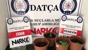 Datça'da uyuşturucu baskını