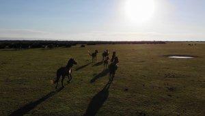Deltada bulunan yılkı atları havadan görüntülendi