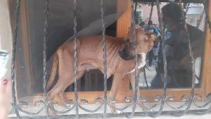 Duyarlı mahalle muhtarının ihbarı hayvanların hayatını kurtardı