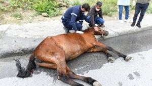 Esenyurt'ta aracın çarpmasıyla yaralanan ata belediye sahip çıktı