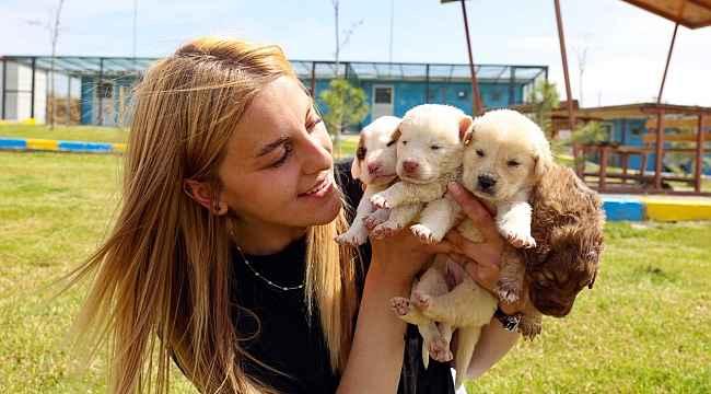 """KAPEM'de hayvanseverler için """"Yerel Hayvan Koruma Görevlisi Eğitimi"""" verilecek"""